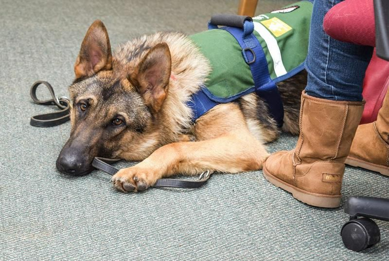 Ndividuals Affected By Seizures Benefit Greatly By A Service Dog