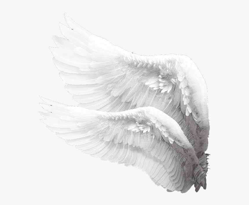 Alas De Angel Png Transparent Png Is Free Transparent Png Image To Explore More Similar Hd Image On Pngitem Alas De Angel Png Alas De Angel Alas