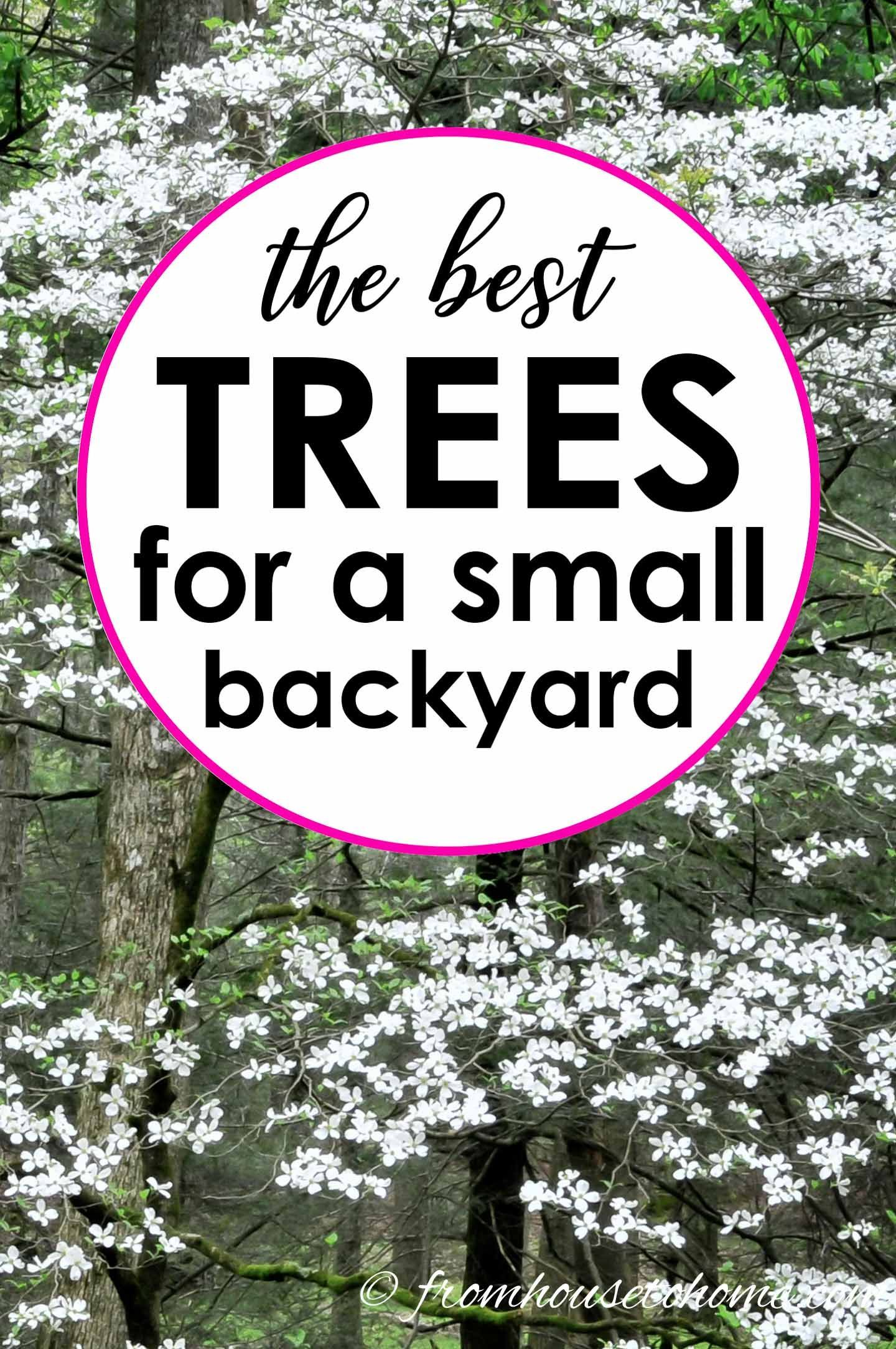 Best Backyard Trees To Provide Shade And Privacy For A 640 x 480