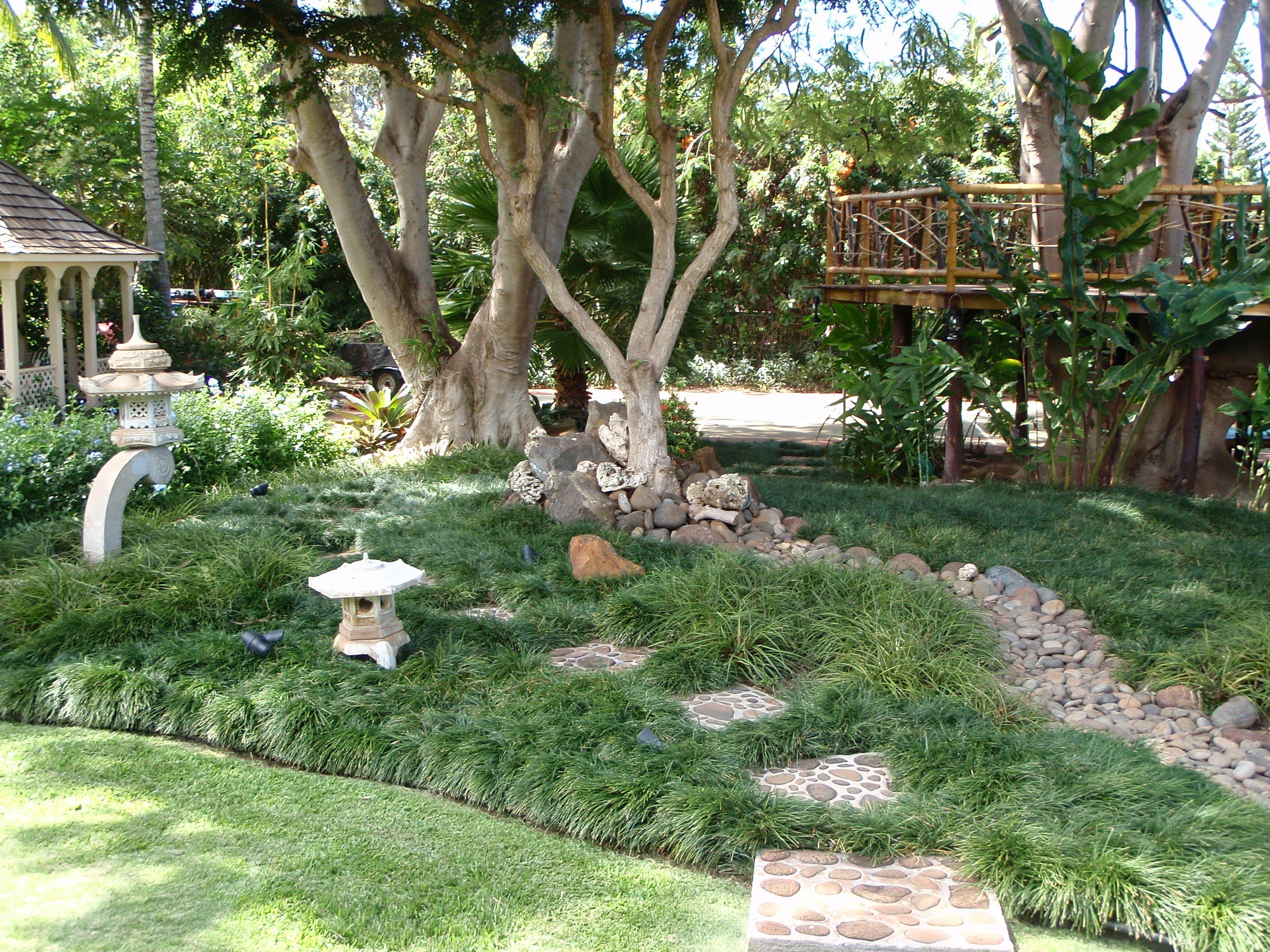 No-Mow Mondo Grass Zen Garden | Outdoor Living | Pinterest