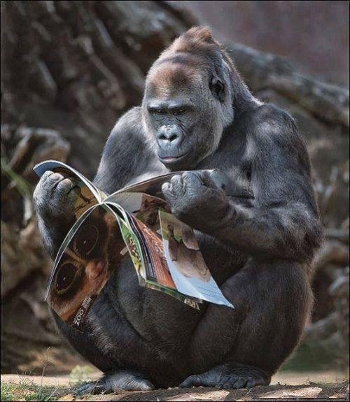 """Eigentlich dürften so einige Zeitschriften irgendwo auf der Seite als Hinweis in Kleindruck ruhig: """"Loslass-Kackunterstützung"""" hinzufügen!...und wir müssten es trotzdem nicht lesen...es geht wie von selbst!"""