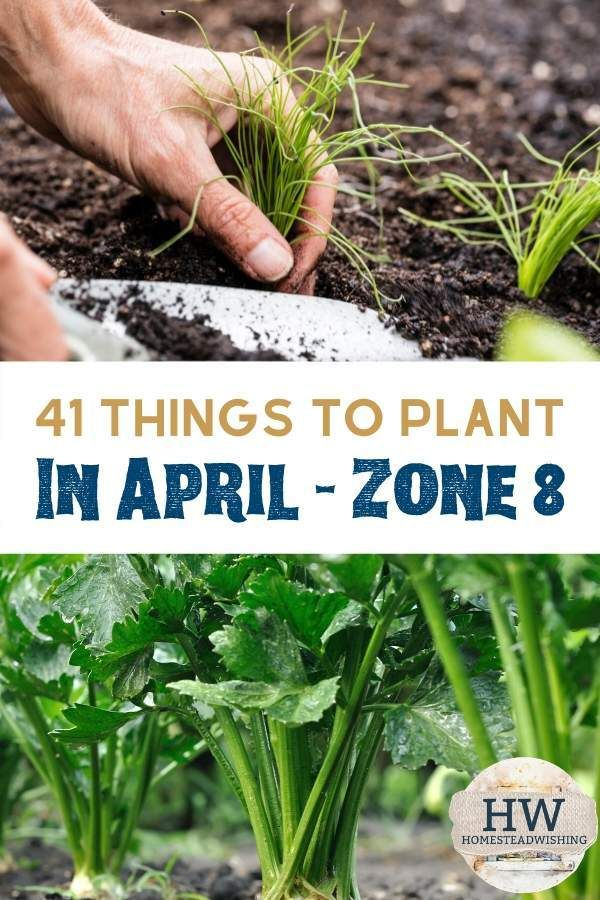 41 Things to Plant in April is part of Spring vegetable garden, Starting a garden, April gardening, Plants, Organic vegetable garden, Garden planning - It's not too late to start a garden this year  Spring is in full effect, and there are many things you can plant this in April when living in zone 8!
