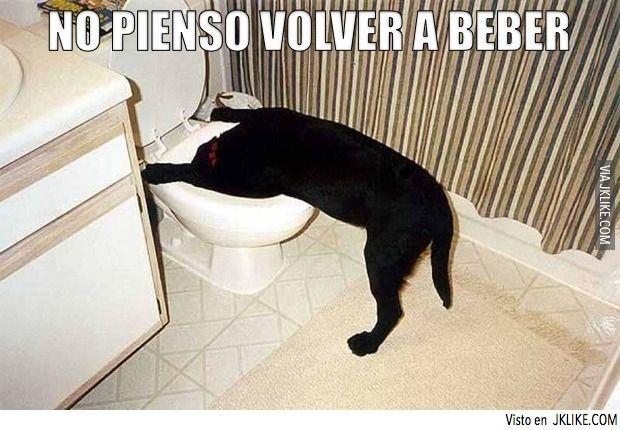 Jklike Dia De Resaca Humor Meme Grafico Perros Gato Vomitando Resaca