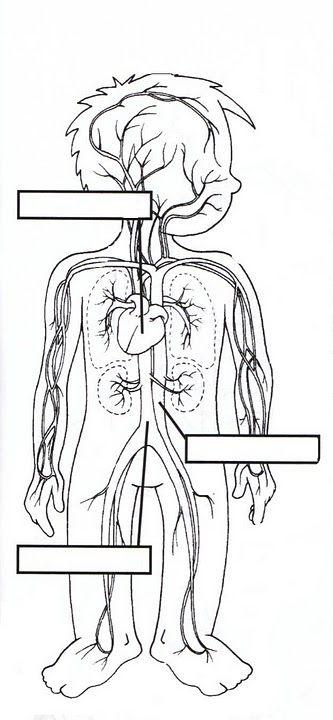 fichas para infantil de los sistemas del cuerpo - Buscar con Google ...