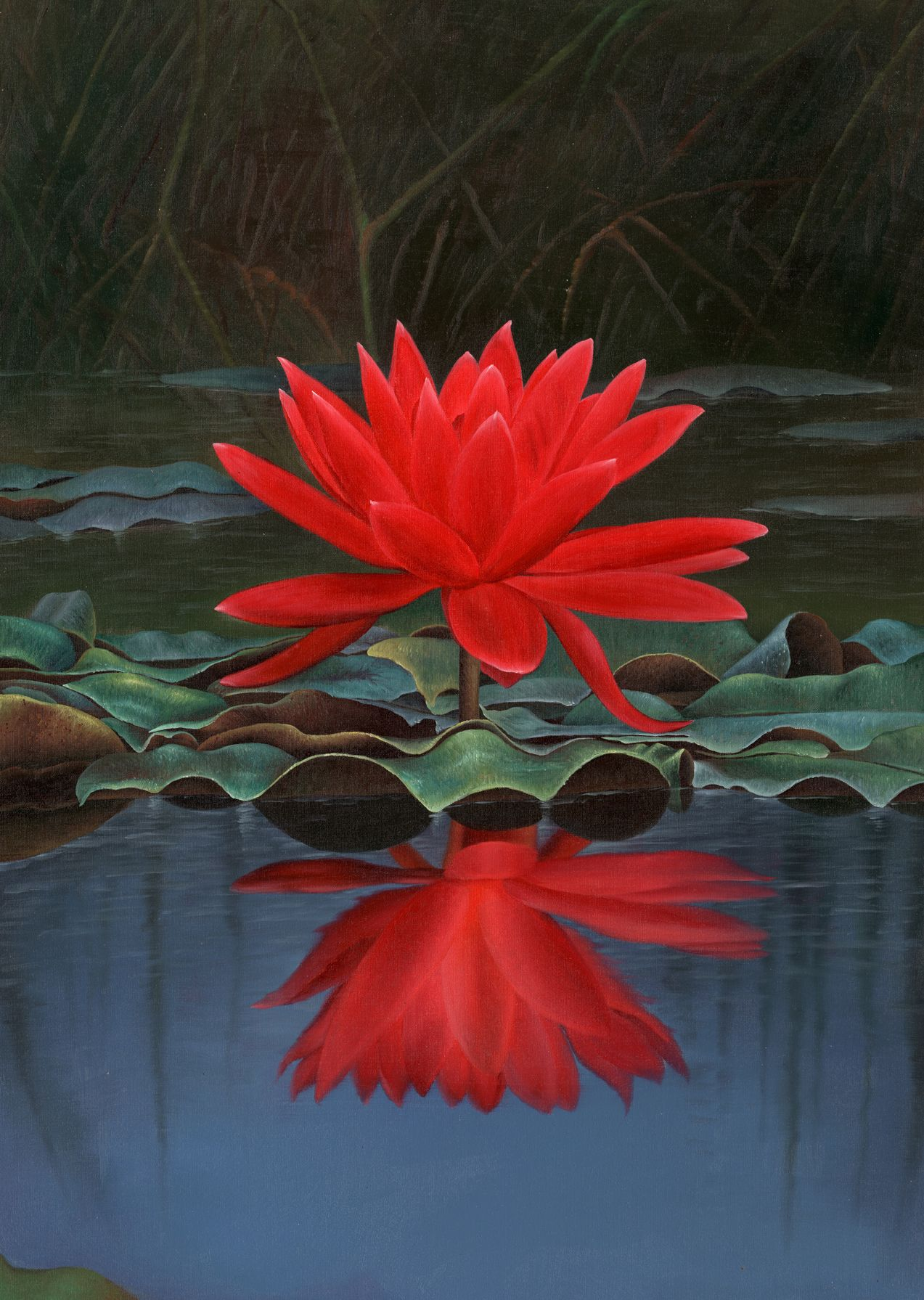 Exotic Flower Photos Free Exotic Red Lotus Flower Free Wallpaper