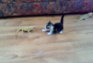 Pets Lovers: Scared Kitten goes crazy! This is just way to funny!  Click to Watch this video : http://petslovers.me/urls/wn5Mx