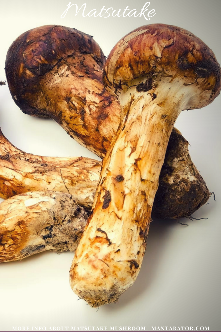 The most expensive mushrooms in the world: names, photos. Which mushrooms are the most expensive in Russia