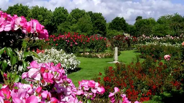 Rose Garden Beautiful Gardens Rose Garden Beautiful Roses