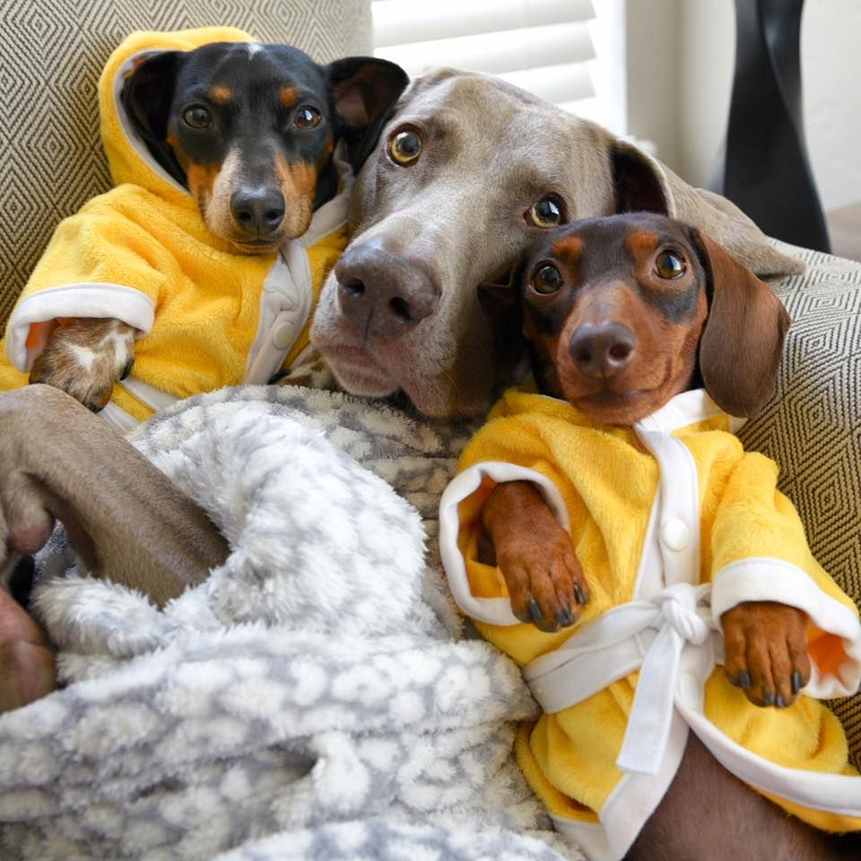 On Sundays We Wear Robes From Harlow And Sage Facebook Page Dogs Cute Dogs Funny Dogs