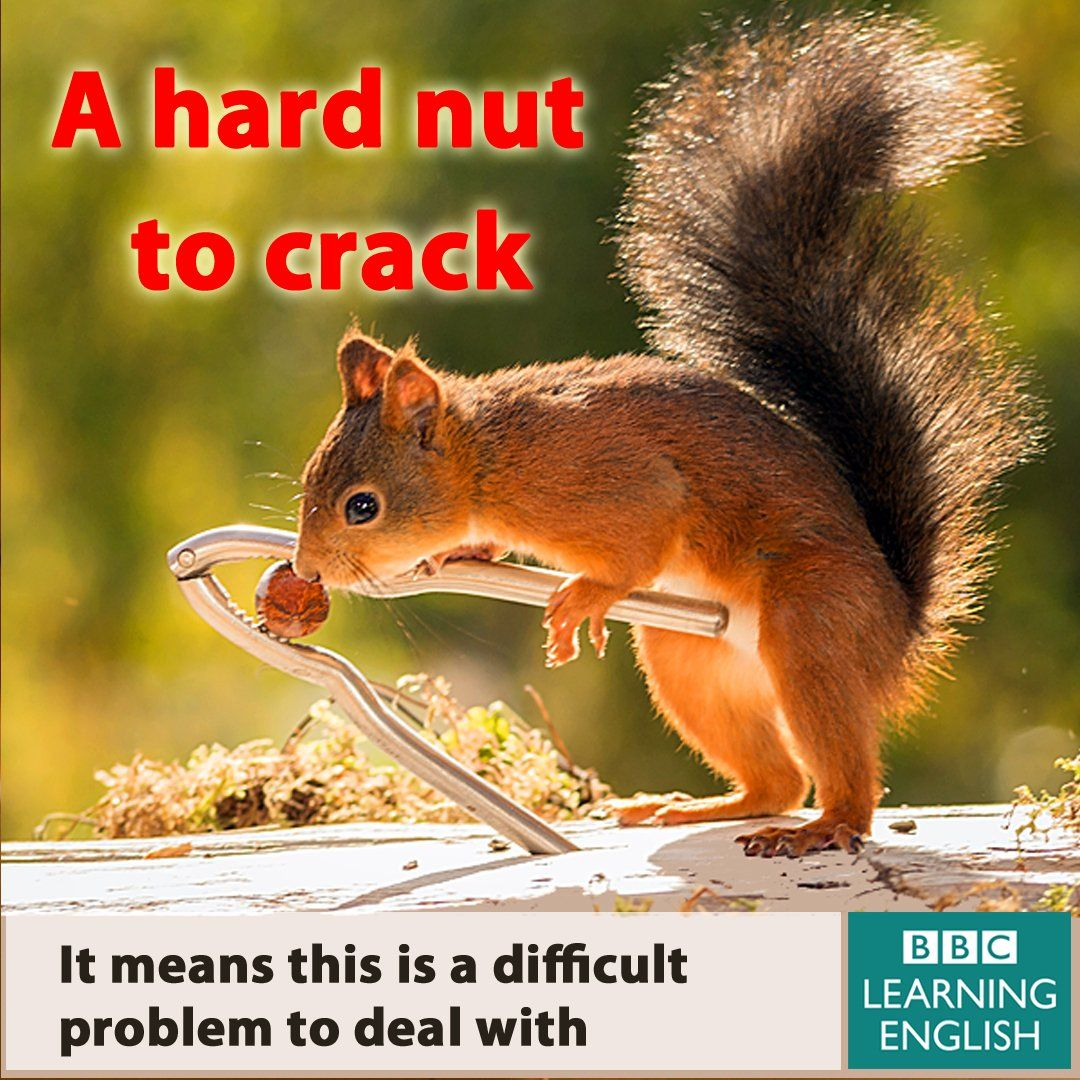 crack some nuts idiom