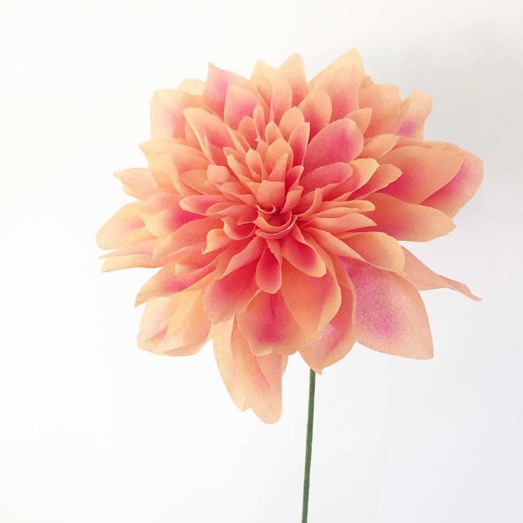 Beautiful painted fine crepe paper dahlia paperflowers flowers