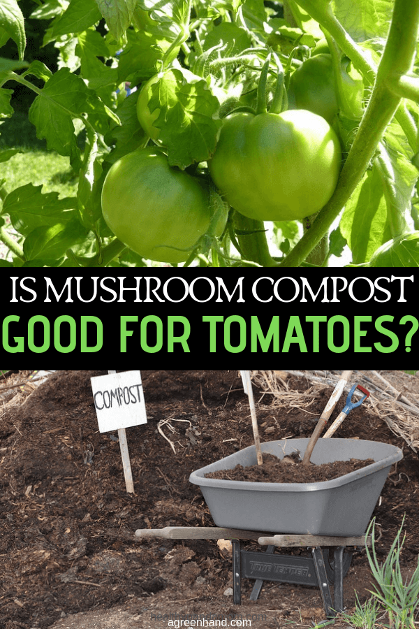 Is Mushroom Compost Good For Tomatoes Mushroom Compost 640 x 480