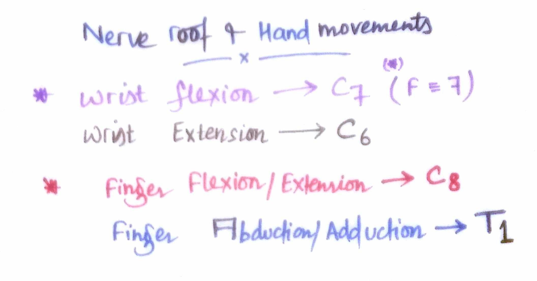 Nerve root & Hand Movements ... | anatomy | Pinterest