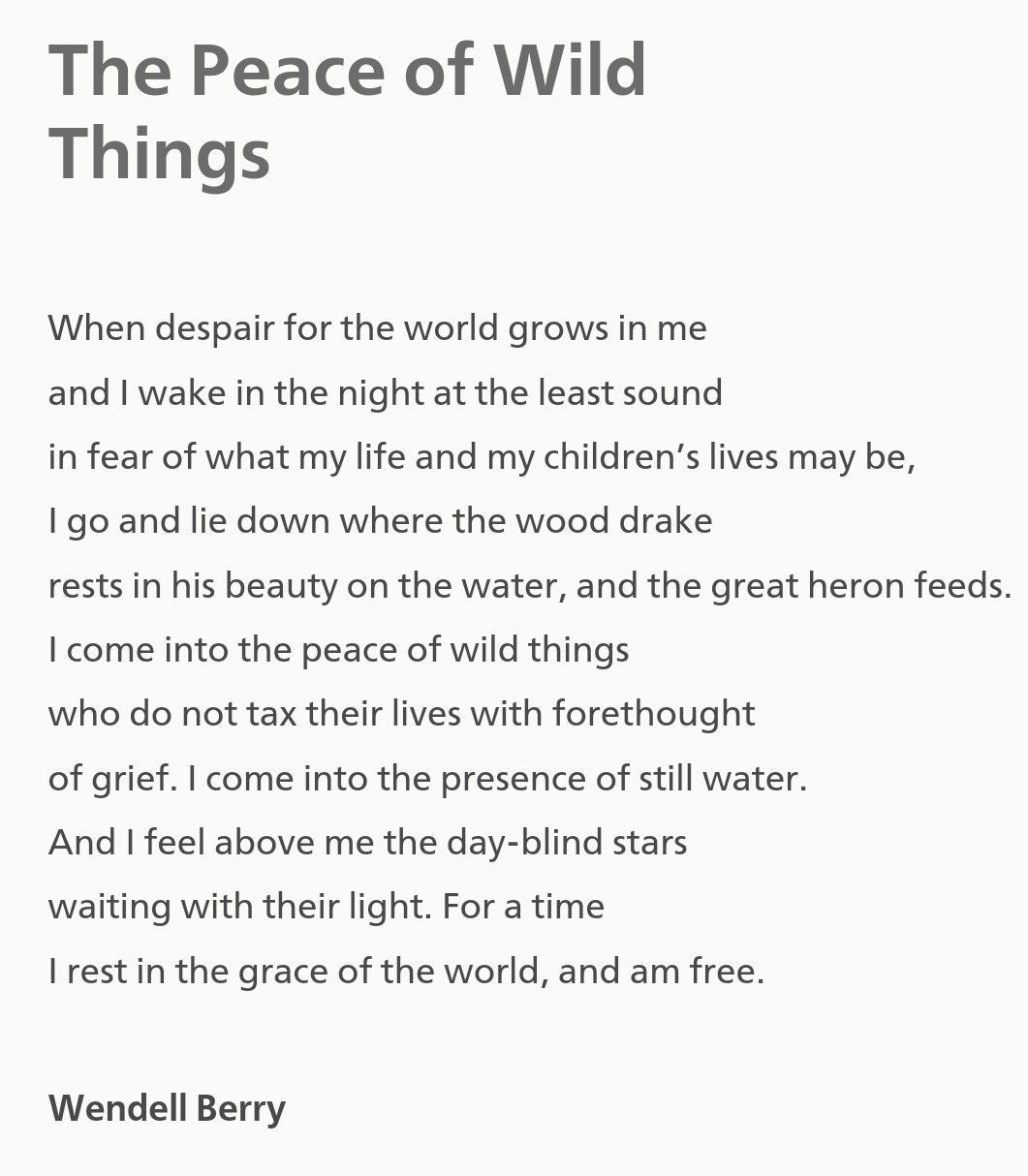 Image result for the peace of wild things