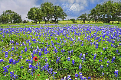 Texas Spring by Lynn Bauer in 2020 Country wall art