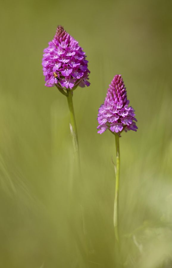 - drxgonfly:   A Forward Glance to Spring (by Sylvia...