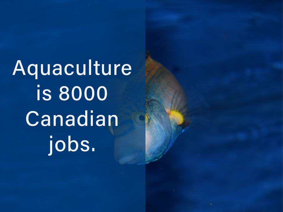 Are you in that sector solving problems? #jobs #aquaculture #fishing #coasts #canada