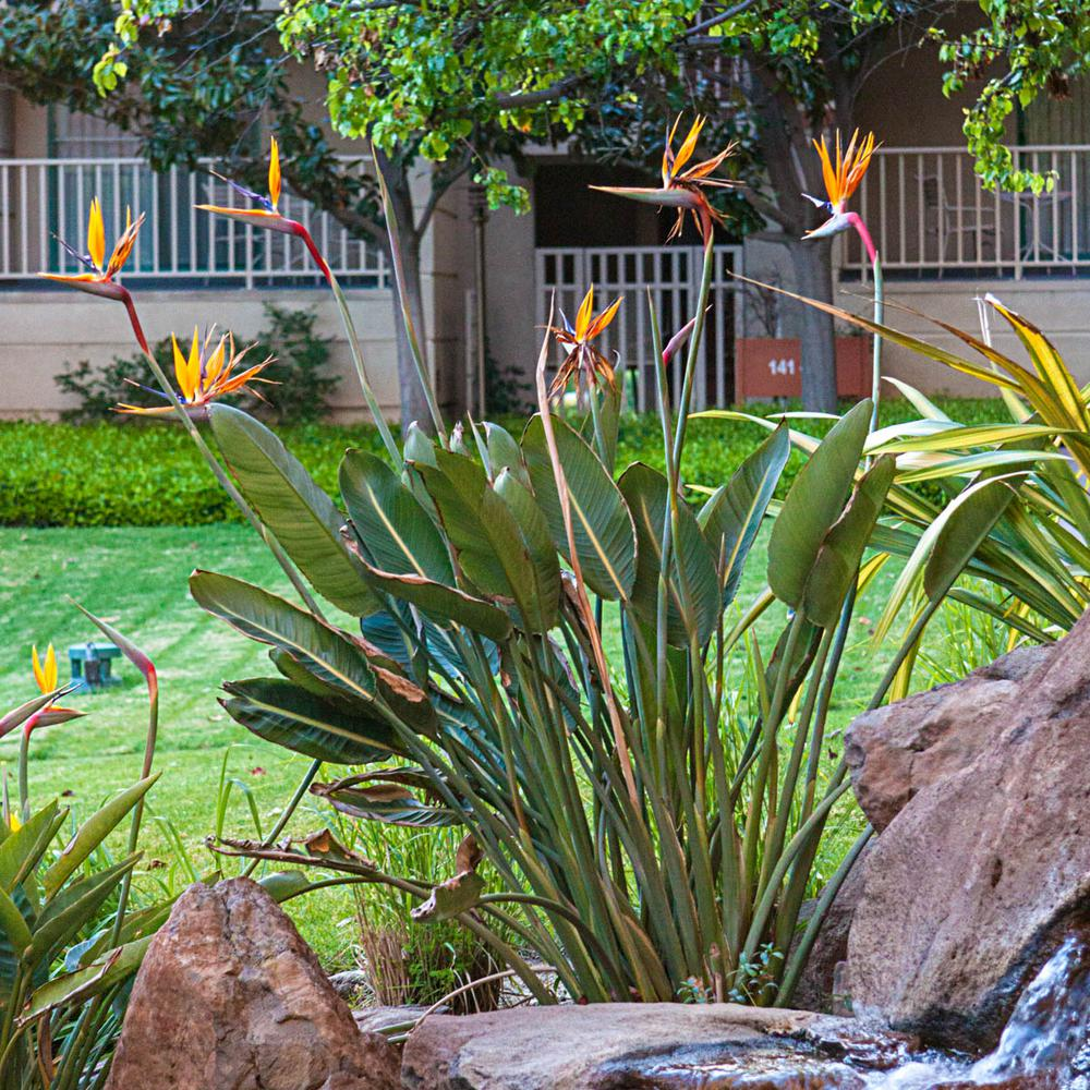 Pin By Lauren Mosher On Front Garden In 2020 Birds Of Paradise Plant Cool Plants Tropical Plants