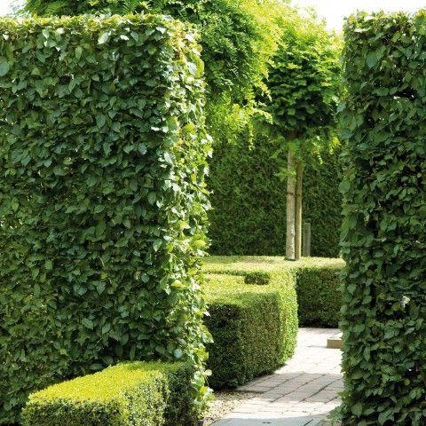 Ongebruikt haagplanten - verschillende hagen (met afbeeldingen) | Tuin hagen EE-63