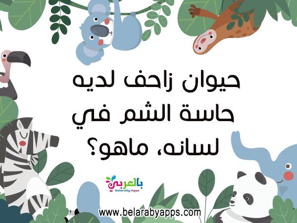 مسابقة اطفال سؤال وجواب بالصور بطاقات أسئلة عامة سهلة بالعربي نتعلم In 2021 School Themes Activities For Kids Home Decor Decals