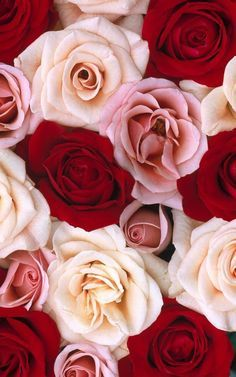 Roses http://ift.tt/1JPtUiG