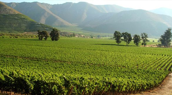 This Chilean vineyard is the perfect next stop for a stylish adventure abroad!