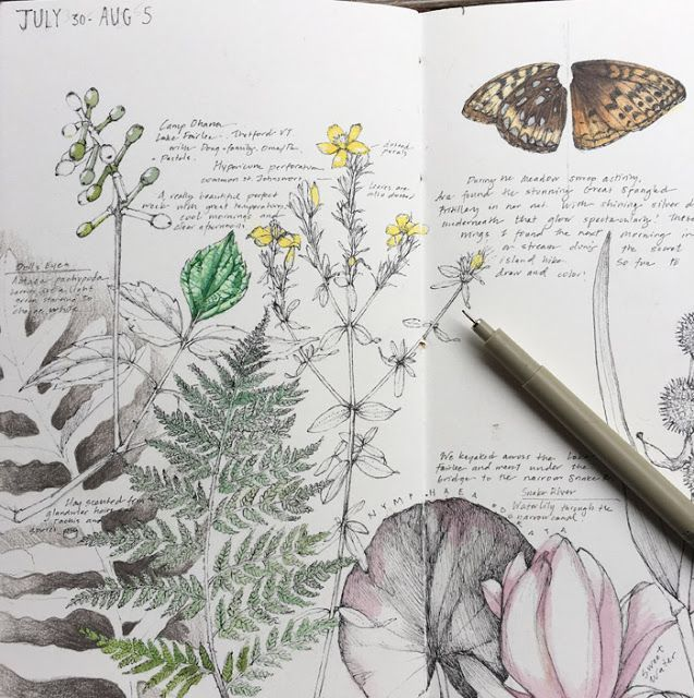 Lara Gastinger Nature Sketchbook Journal Pages July 30-August 5