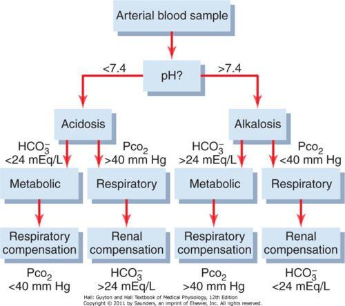 6) Potassium Regulation and Acid-Base Balance Flashcards | Quizlet ...