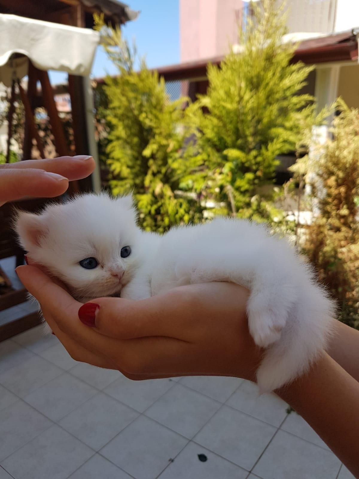 My Neighbors Cat Gave Birth To 2 Kittens A Couple Weeks Ago This Little Princess Knows She S Cute Cutehuggablepic Cute Animals Cute Cats Cute Baby Cats