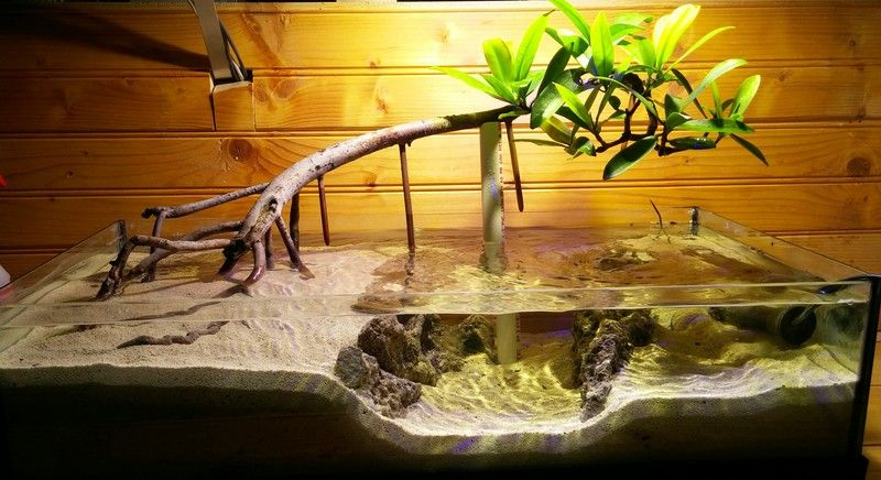 Page 5 Of 7 The Lone Mangrove New Scape And Mantis Posted In Members Aquariums Sooooooo