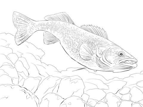 Coloring Page Fish Walleye Img 20447 Fish Drawings Walleye