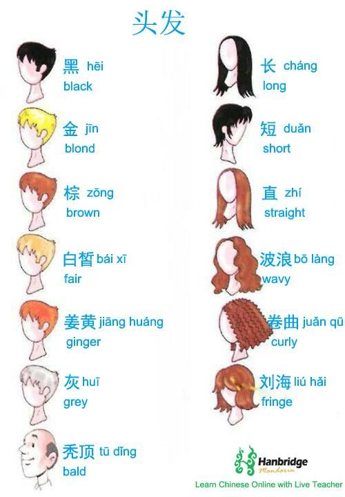 Amante ho bisogno vedova  Hair types, just in time for us to play 'Guess Who!' | Learn chinese,  Chinese language, Chinese language learning