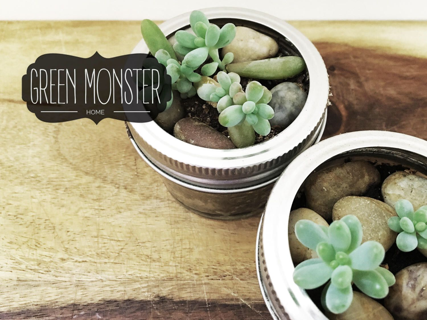 Live Succulent Plant Jelly Bean Plant For Your Desk Plants Size 5 1 5 Inch In Cute Glass Jar Sma Small Gifts For Coworkers Gifts For Coworkers Succulents
