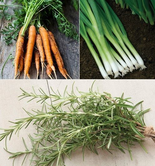 Carrot Companion Planting Seed Collection Set 400 x 300