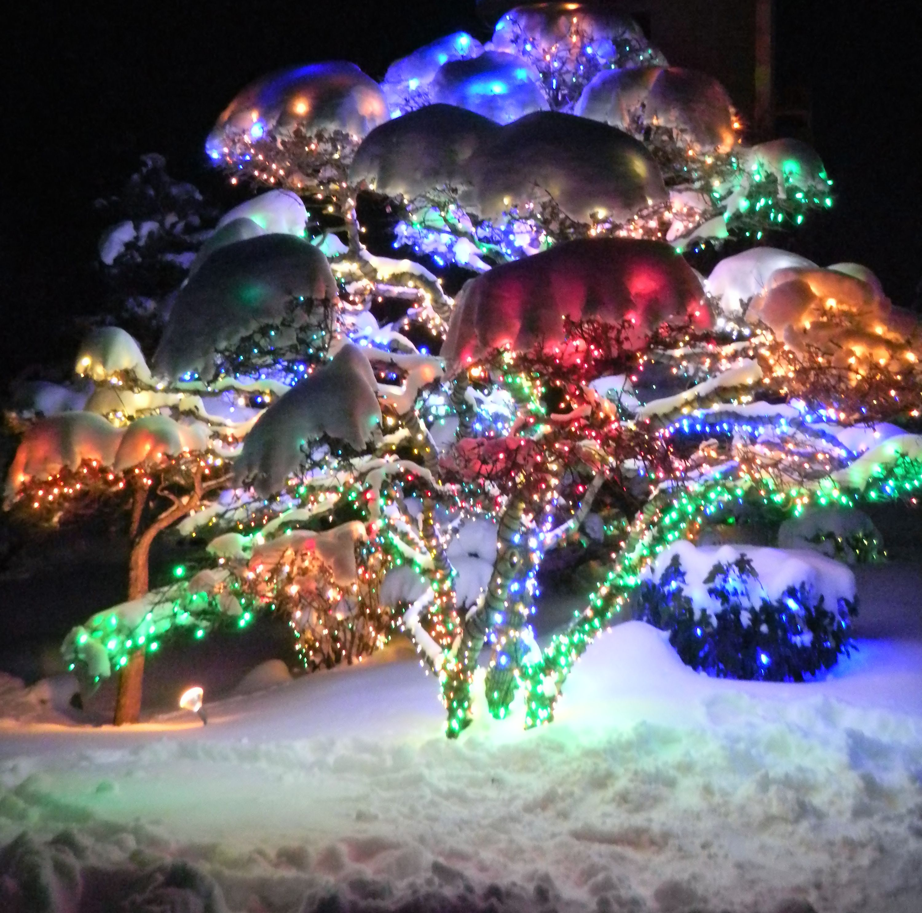 Denver Botanical Gardens Taken By Ray Chavez #Christmas #Lights