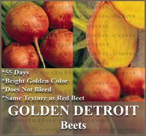 1 OZ Golden Detroit Beet Seed
