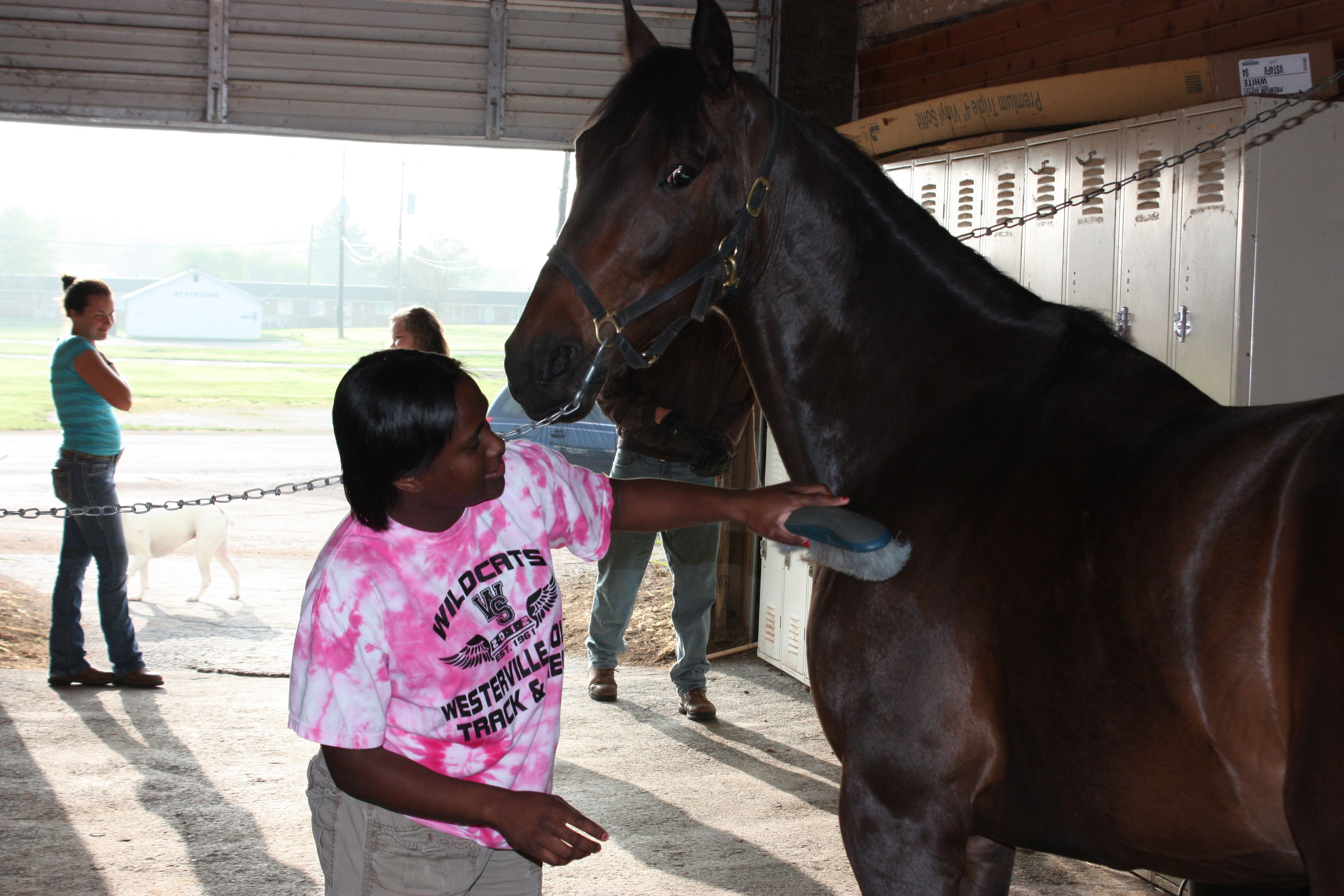 Equine Science At Dacc Equines Science Programs Science