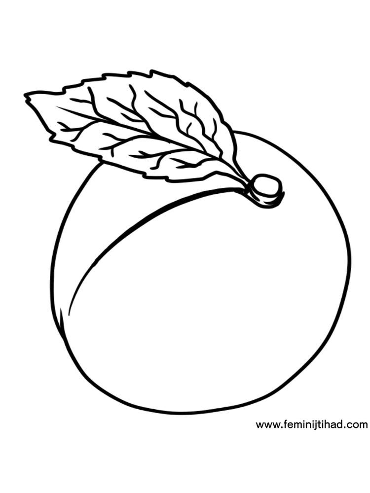Apricot Coloring Page Image
