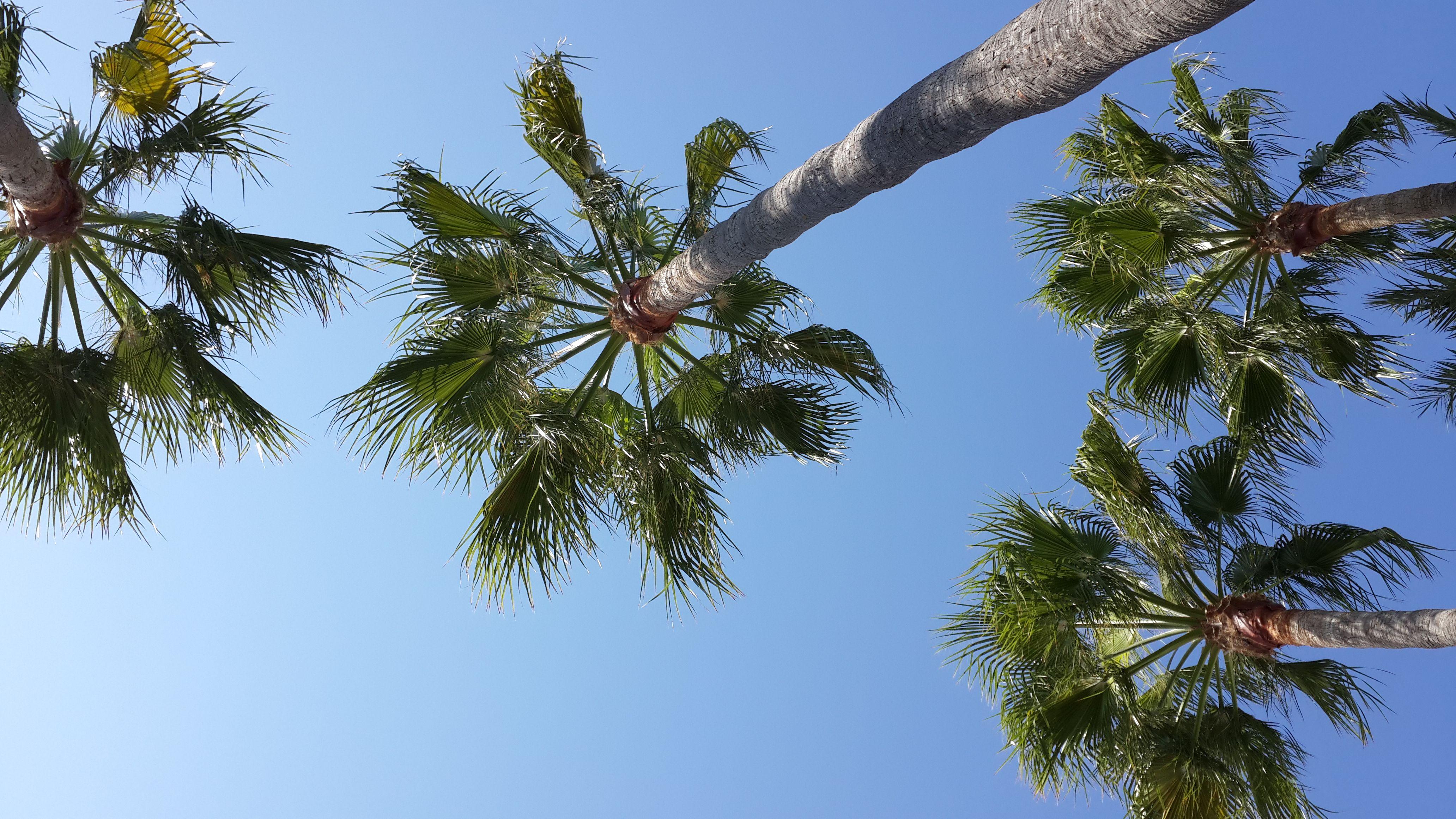 Recuerdos de verano entre palmeras....