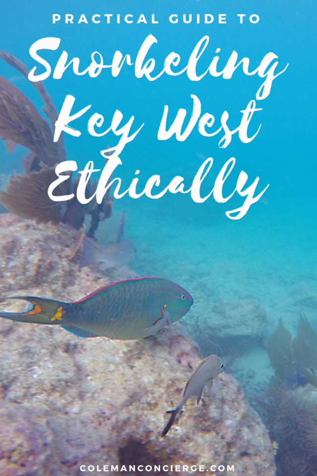 Snorkeling Key West Ethically- Our Guide to the ...