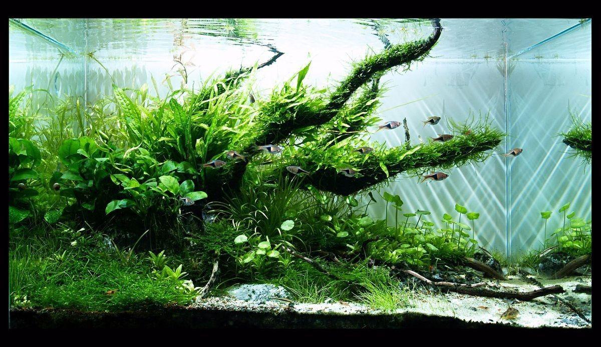 Aquarium Deko Steine In 2020 Aquarium Gestalten Aquascaping Aquarium Deko