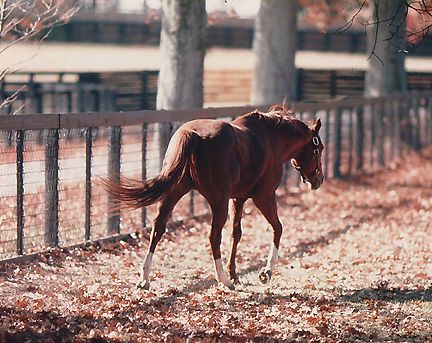 claiborne farm photos | Secretariat in the pasture at Claiborne Farm