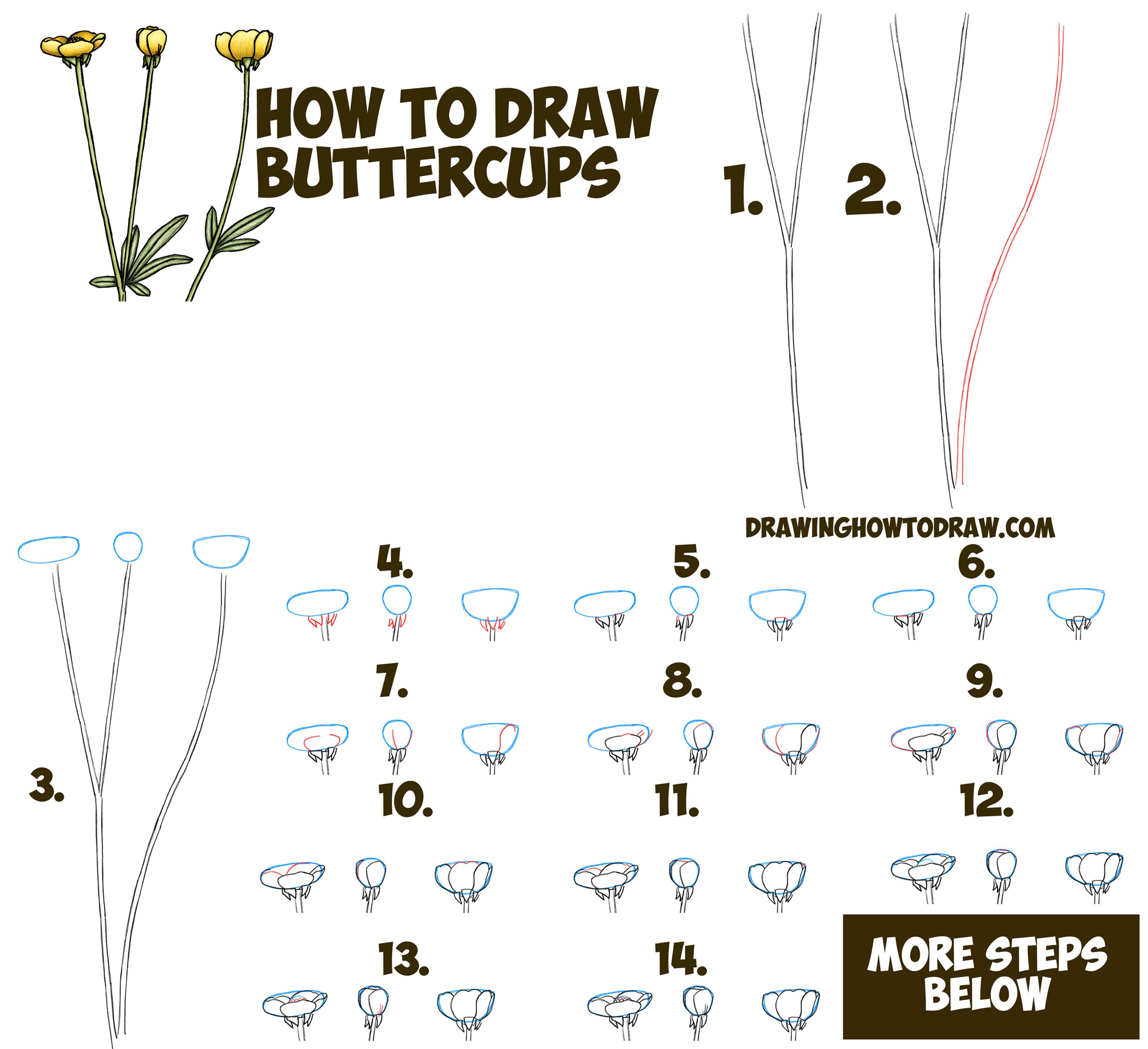 How To Draw A Buttercup Flower Step By Step Drawing Tutorial (buttercups)  Easy For