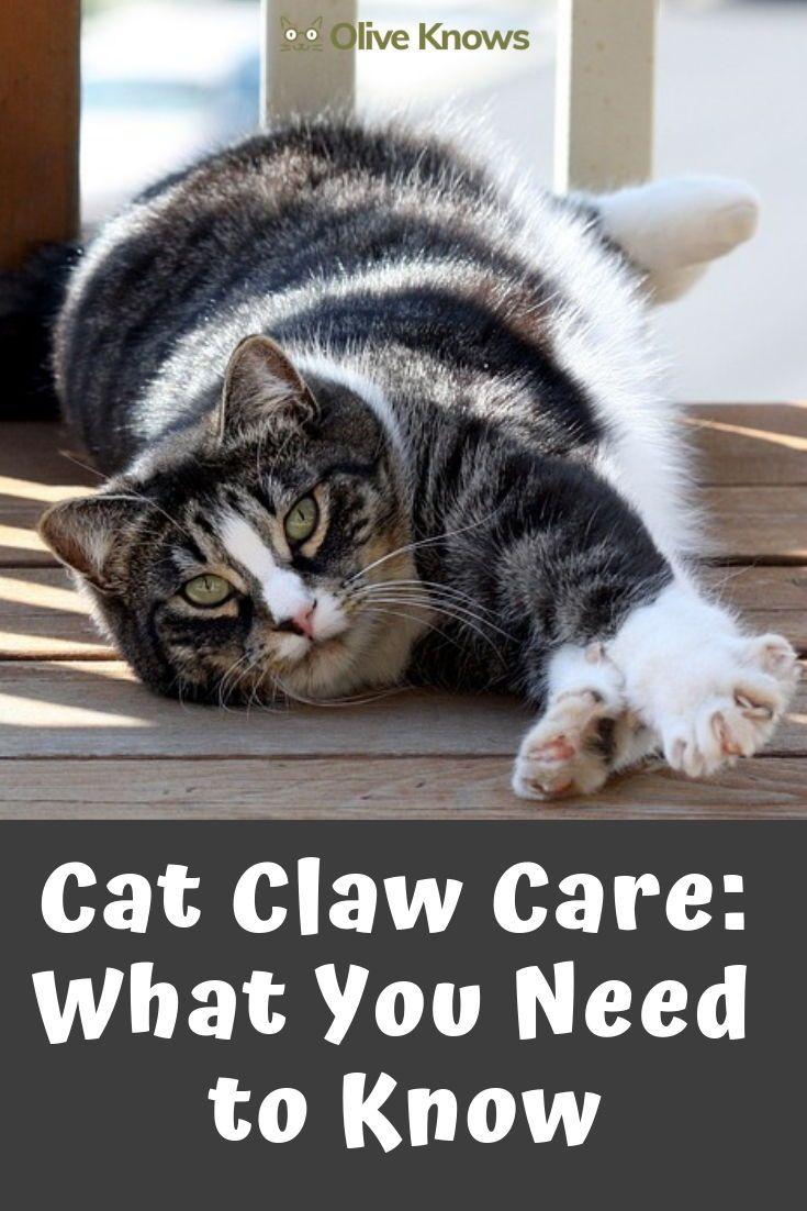 Cat Claw Care Cat care, Cats, Senior cat care