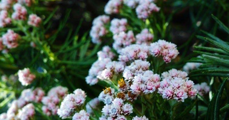 Taman Bunga Terindah Di Magelang