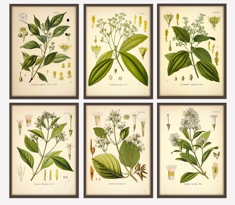 Botanical Prints Set, Botanical Illustration, Botanical print ...