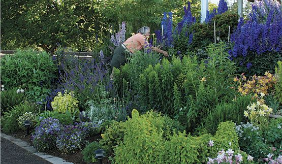 The Best Flowers for Your Cutting Garden - Fine Gardening Article