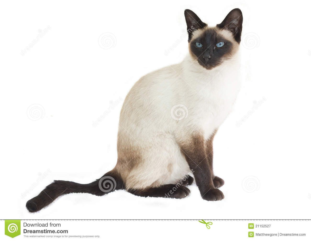 Siamese Cat Sitting Royalty Free Stock Photography Image