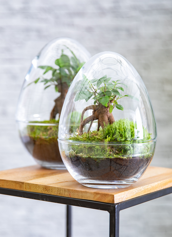 Comment Faire Un Terrarium Plante Grasse comment faire un terrarium humide en 8 étapes | comment