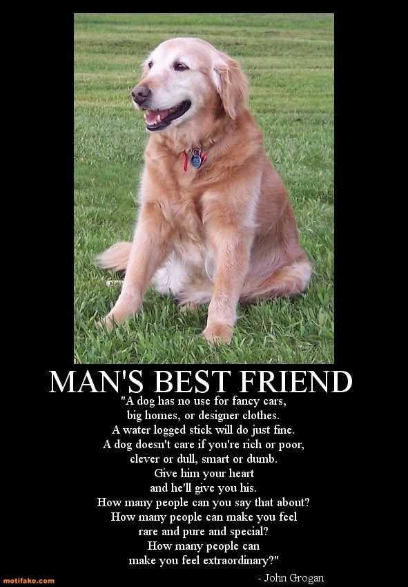 Man's Best Friend Quotes : man's, friend, quotes, Man's, Friend, Dogs,, Loyal
